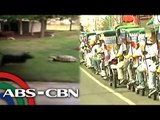 Bandila: Cauayan City sets new world record; Turtle, dog chase each other