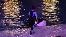 Shamu Christmas Miracles SeaWorld San Diego 12-23-14