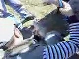 mr fisherman presents pasquetta 2007 caccamo