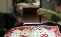 dreister Papagei