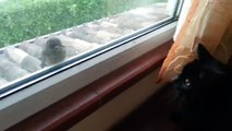 Un chat essaie d'effrayer un oiseau