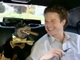 Triumph the insult comic dog and access Hollywood