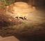 Deux renardeaux jouent avec une balle