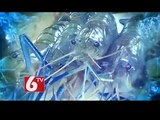 Prawns Export Business Increasing In India - AP State Has Good Shares In The Business