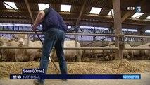 Agriculture : les éleveurs bovins protestent