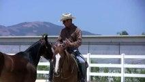 Horses that kick other horses