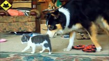 FUNNY VIDEOS   Funny Cats   Funny Dogs   Dogs Love Kittens   Funny Animals   Funny Cat Videos