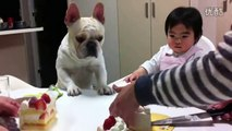 Funny babies annoying dogs - Dogs and babies are best friends Cute dog & baby compilation 2015