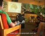 Tasmanian Devil - Devils@Cradle - DEVILS ON THE VERANDAH