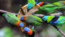 Aves coloridas da Mata Atlântica - The most beautiful and colorful birds