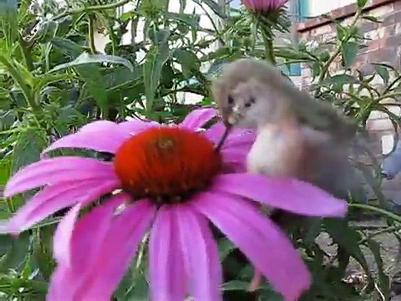 Petting a Wild Baby Hummingbird