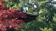 Giappone #10: Koyasan - Il Giappone Mistico