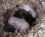 baby bunnies 1 week old