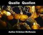 Qualle Quallen Fische Tiere Animals Natur SelMcKenzie Selzer-McKenzie