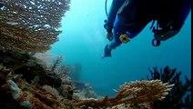 PROFUNDIDADES EN PELIGRO 2 de 4 - BBC - Planeta Azul La Vida En Los Oceanos 09 de 10.mov
