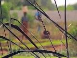 The CEDES, Adjarra, Benin-the Trailer