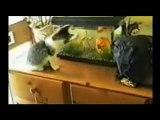 betisier de chats