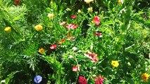 francois hollande biodiversité nourriture toxique abeilles ecologie Poison dans notre assiette