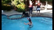 Funny Dog In Pool - Dump a day funny dog pool pushed falling