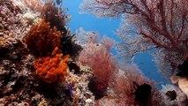 Raja Ampat, Indonesia - Scuba diving in paradise