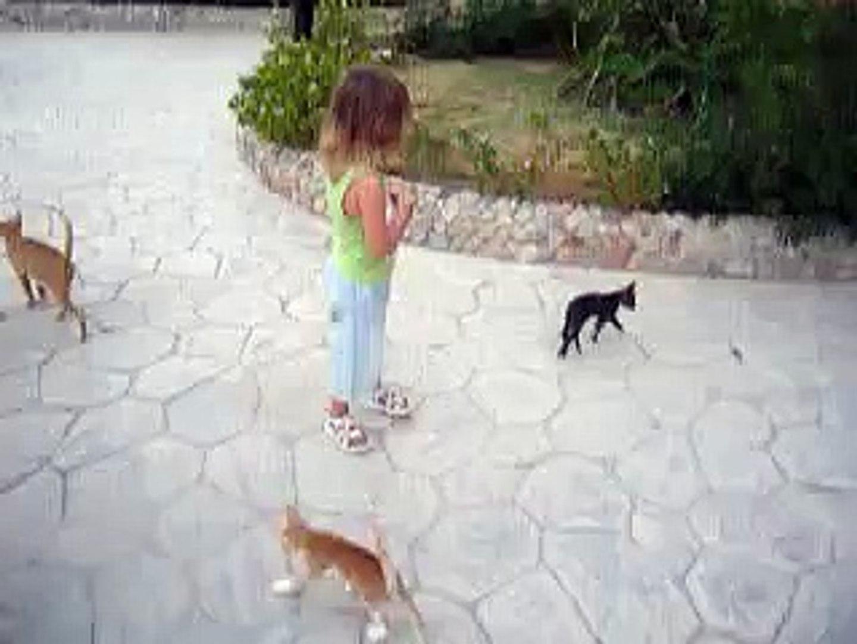 Котята разбежались кто куда, Египет 2010г,  kittens