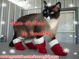 Santa Cat in Boots ATTACKS Pit Bull Sharky! *Happy Holidays!* ;) HelensPets.com