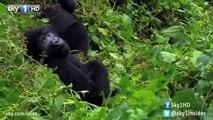 An Idiot Abroad 2: Gorilla (Deleted Scene)