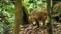 Nido Gigante del Pavo Australiano | Animales Salvajes - Planet Doc