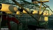 FANTÁSTICO: Mergulho junto a tubarões é atração na África do Sul (27/06/10)