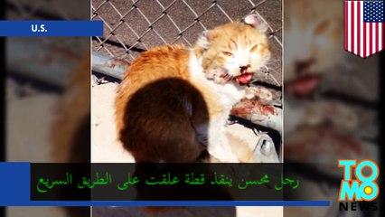 رجل محسن ينقذ قطة على طريق فونيكس السريع في أريزونا الأمريكية