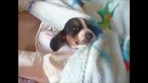 犬が無心で遊んでいる姿が子供の様に純粋で可愛いすぎる! 最高級の超絶癒し動画