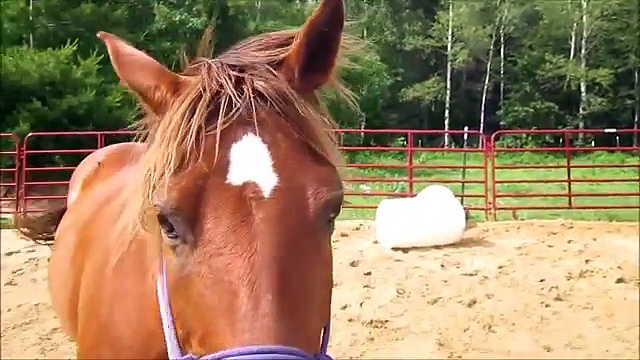 Horses Neighing