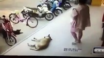 Man Kicks Sleeping Dog, Dog Bites Back