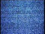 TV addict dog! - Barking Mad - BBC pets