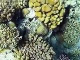 שמורת האלמוגים אילת-Eilat Coral Beach Nature Reserve