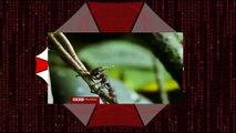 Hormigas Zombies │Zombies Ants