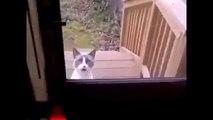 Un chat terroriste parle en arabe...