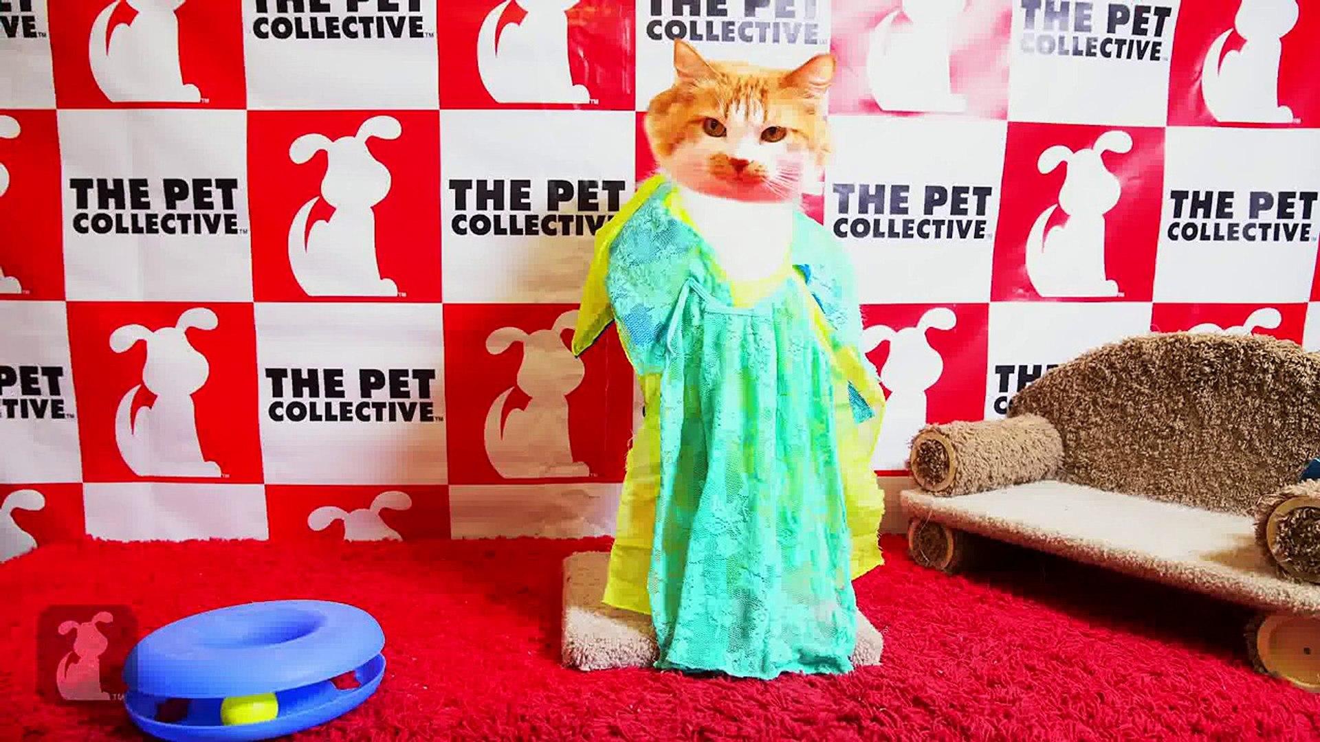 Fashion Police - Cat Fashion - Golden Globes 2015