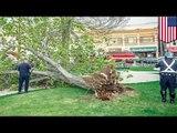 Un arbre tombe sur des enfants : deux enfants sont hospitalisés à Chelsea