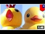 Le canard en plastique de Hoffman a de la sérieuse concurrence! Un poulet en plastique!!