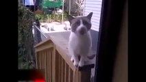 Un chat terroriste ! (Humour)