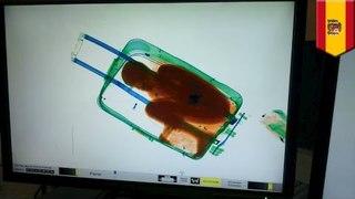 手提行李藏八歲人蛇 偷渡去西班牙