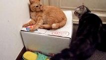 ケンカやめて~って訴える猫 Cat tries to stop the fight