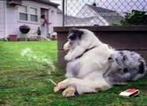 humour funny clips - dog (2)