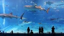 Kuroshio Sea - Dünyanın En Büyük 2. Akvaryumu