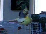 bird sex