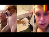 Man beats defenseless dog in video in revenge on girlfriend who dumped him