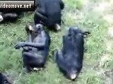 maymunların çiftleşmesi - hayvan çiftleşmeleri - izle