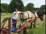 Belgian Draft Horse powered grass mowing - gras maaien