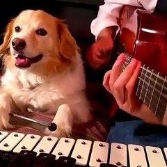 Başarılı köpek müzisyen